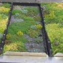 Green Roof Proves a Cost-Effective Way to Keep Water out of Sewers