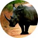 Especies extintas…o casi: Rinoceronte negro