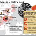 La E.Coli mortal pone en alerta a Bolivia y Salud fija una estrategia