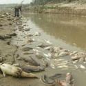 Tarija declarada zona de desastre por el Pilcomayo
