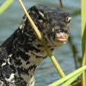 Exploración de especies: hallazgos más llamativos del 2011