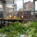 Agricultura en el techo de los edificios