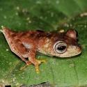 Descubren más de 40 especies en la jungla de Surinam