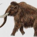 Clonarán a un mamut