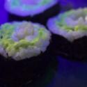 Se vende sushi con pescados luminosos