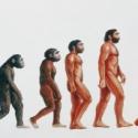 ¿Por qué los seres humanos caminan erguidos?