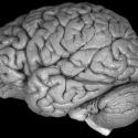 Datos increíbles sobre el cerebro