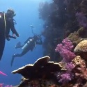 VIDEO: Dakuwaqa's Garden – Underwater footage from Fiji & Tonga