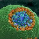 El Nobel de Medicina 2013 premia hallazgos en sistemas de transporte celular