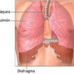 Diafragma 1 X