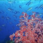 Gran Barrera de Arrecifes 3