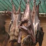 3011-sleeping-bats