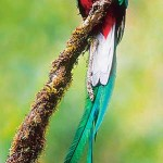 Quetzal 2 X