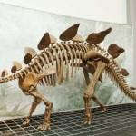 Stegosaurus 2