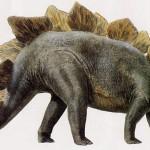 Stegosaurus 3 X