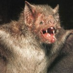Vampire Bat X