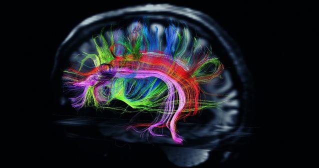 cerebro-638x336