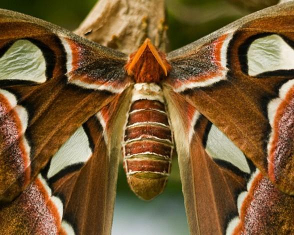 2. Mariposa atlas